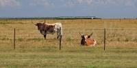 0810-Longhorns