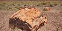 1106-PetrifiedForest